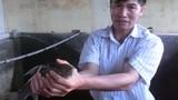 Kinh ngạc chuyện nuôi cá tiến vua siêu khủng ở Phú Thọ