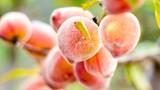 5 loại trái cây tốt nhất cho sức khỏe trong mùa mưa