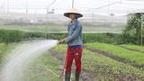 Cử nhân kĩ thuật máy tính trồng rau sạch kiếm 20 triệu/tháng