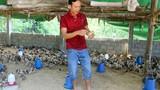 Bỏ nhà vào rừng nuôi gà bằng thảo dược