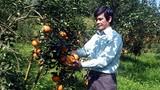 Ngạc nhiên xã có 41 tỷ phú giàu sụ nhờ trồng cam sành