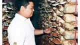 Kỹ sư điện đi... trồng nấm, sở hữu 32 loài nấm quý