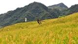 Vẻ đẹp hoang sơ hút hồn ở dãy núi cao nhất Quảng Ngãi