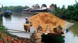 Lạ lùng trấu, rơm Việt Nam bất ngờ trở thành hàng hiếm