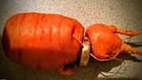 """Mất nhẫn vàng, 3 năm sau được củ cà rốt """"mang trả"""""""