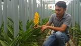 Bỏ việc về trồng lan, bỏ túi 25 triệu đồng/tháng