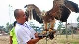 Kỳ công thú chơi chim săn mồi của dân Việt