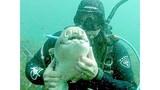 """Cá mập """"tiền sử"""" rúc vào tay thợ lặn đầy âu yếm"""