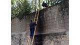 """""""Cò du lịch"""" Trung Quốc xúi du khách vượt tường trốn vé vào vườn thú"""
