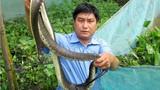 Hãi hùng cách nuôi rắn ri cá trong vèo, thu trăm triệu