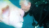 Cá khổng lồ 25 năm cho ân nhân ôm ấp, vuốt ve