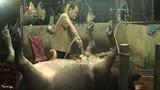 Cận cảnh trâu bò bị bơm nước bẩn trước khi mổ