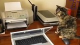 Phát cáu với những chú mèo siêu nghịch ngợm