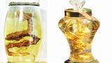 Sự thật không tin nổi về rượu sâm Ngọc Linh siêu quý hiếm