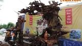 Bàn ghế gỗ lu đinh siêu độc tiền tỷ của đại gia Thái Bình