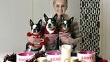 Chi hàng trăm triệu sắm đồ Giáng sinh hoành tráng cho thú cưng