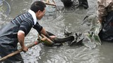 Lội bùn rừng ngập mặn săn cá đồng mưu sinh
