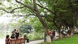 Ngắm những cây sưa cổ thụ tiền tỷ bên Hồ Gươm