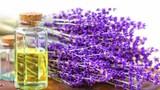 Công dụng tuyệt vời của tinh dầu hoa oải hương