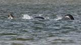 """Hình ảnh rõ nét nhất về """"quái vật hồ Loch Ness"""""""