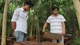 Dân đập phá trại ong ở Quảng Ngãi vì sợ mất mùa