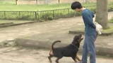 Những cách xử trí khi bị chó tấn công hiệu quả nhất