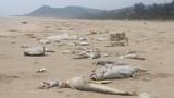Công an vào cuộc làm rõ trách nhiệm sở, ngành vụ Formosa đầu độc biển