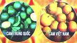 Cách phân biệt cam, hồng giòn, dưa lưới Việt Nam và Trung Quốc