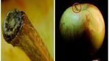 Hình ảnh lạ lẫm của đồ vật quen thuộc dưới ống kính macro