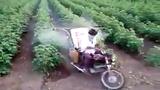Đây là cách nông dân Ấn Độ phun thuốc cho cây