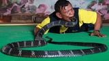 Làng rắn hổ mang ở Thái đối mặt với cuộc chiến để sinh tồn