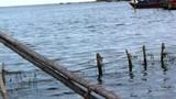 Cứu sống 4 ngư dân dạt biển vì sóng đánh chìm thuyền