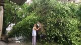 Thiệt hại ban đầu do bão số 2 tại Nghệ An, Hà Tĩnh