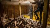 Hàng ngàn cá mập chất đống trong tàu Trung Quốc gây sốc