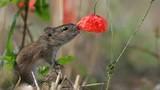 Những tuyệt tác ảnh động vật, thiên nhiên hoang dã