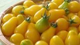 Hình ảnh cà chua lê vàng gây sốt thị trường