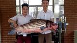 Bắt được cá Hô quý hiếm hơn 30kg ở Tây Nguyên