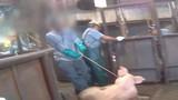 Cảnh hành hung lợn kinh hoàng trong khu lò mổ