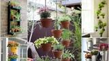 Những giỏ hoa treo trang trí nhà tuyệt đẹp