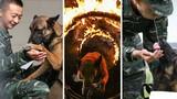 Ngắm xem cảnh sát Trung Quốc huấn luyện chó nghiệp vụ