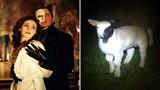 """Con cừu kỳ dị có khuôn mặt của """"bóng ma"""""""