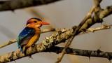 Vẻ đẹp khó cưỡng của những loài chim hoang dã