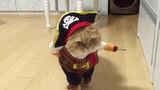 Khoảnh khắc lúng túng cực yêu của mèo cưng