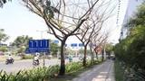 Điều tra vụ nhiều cây xanh bị đầu độc ở Sài Gòn