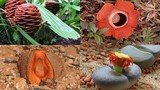 Cận cảnh những loài hoa kỳ quái quý hiếm trên thế giới