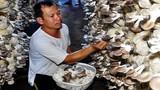 Anh nông dân Quảng Ngãi thu nửa tỷ mỗi năm nhờ trồng nấm