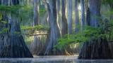 Những loài cây kỳ lạ ngỡ như chỉ có ở thế giới khác