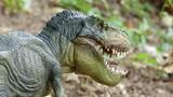 Phát hiện thú vị khủng long cũng từng có răng sữa