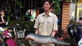 Khám phá về cá sấu hỏa tiễn dân bắt được sau mưa lũ
