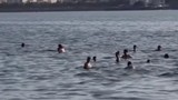 Clip: Dân Thủ đô đổ xô bế chó, lợn ra hồ Tây giải nhiệt